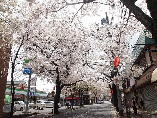 桜が咲くとキレイです。