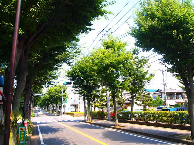 前面道路は並木通り。