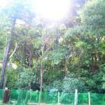 目の前は林