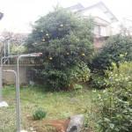 広々とした庭があります。