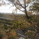 窓を開けると江戸川が見えます。