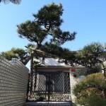 松のアーチのある入り口(外観)