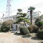 様々な木々の生える庭(外観)
