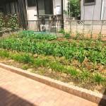 家庭菜園用のスペースも